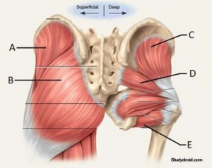 Gluteal-Stretches-Muscles